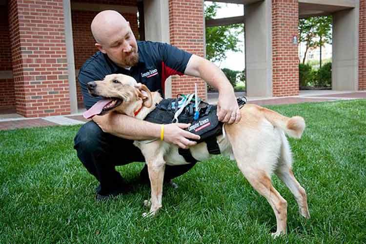 CEWD, el wearable que permite la comunicación entre los perros y sus dueños