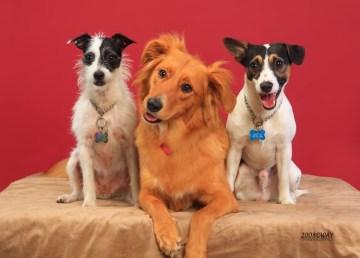 Estudio demuestra cómo los perros entienden lo que decimos