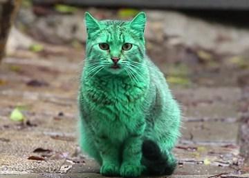 El misterio del gato verde 2