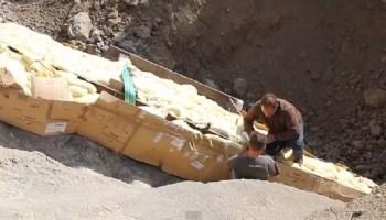 Encuentran en Lleida el cuello de un dinosaurio de 5 metros de longitud