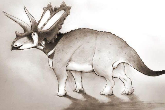 Descubren dos nuevas especies de dinosaurio en un museo de Canadá 1
