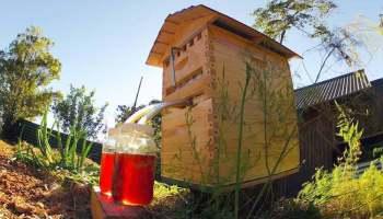 ¿Recolectar la miel sin abrir las colmenas? Sí, el invento se llama Flow