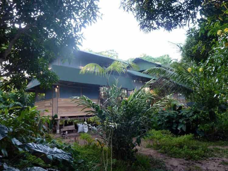 camino-verde-living-seed-bank-jungle-headquarters