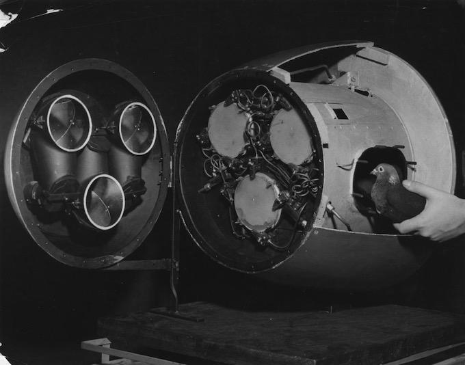 6 proyectos que empleaban animales como armas en la guerra moderna