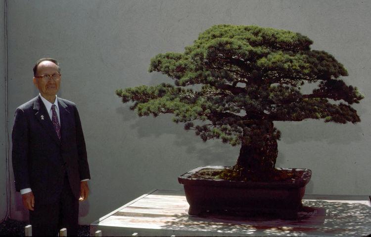 Bonsai tetracentenario sobrevivio bomba Hiroshima 1