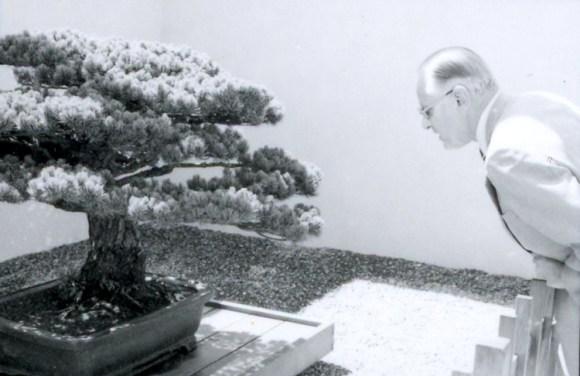 Bonsai tetracentenario sobrevivio bomba Hiroshima 2