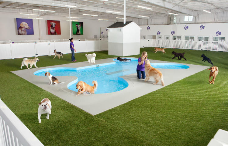 Aeropuerto JFK abrira terminal exclusiva mascotas
