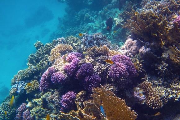 Arrecife de coral / Shutterstock