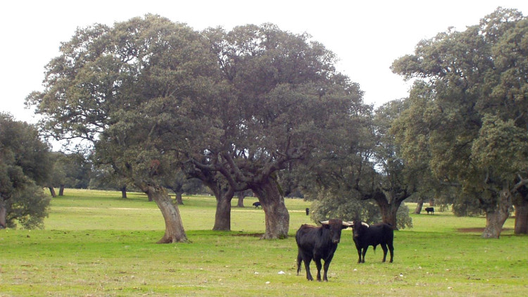 Antrtopologo britanico mundo taurino español
