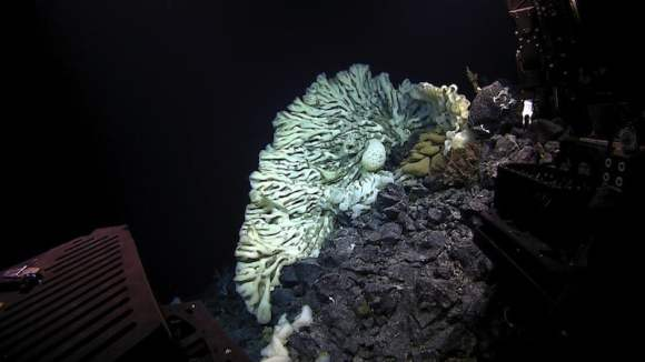 PHOTO - Biggest Sponge in Papahanaumokuakea Far Away_800x449