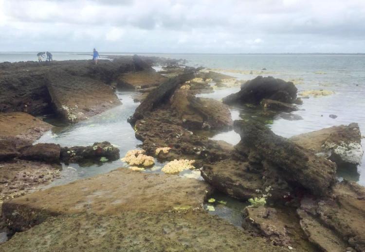 Descubren en costa tanzana presuntas ruinas ciudad perdida Rhapta