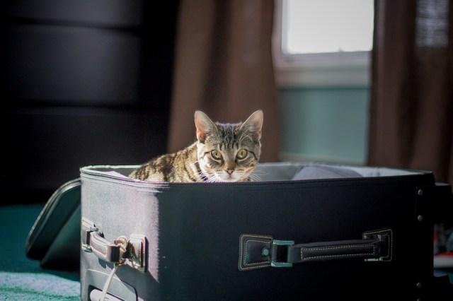 Viaje en renfe con gato