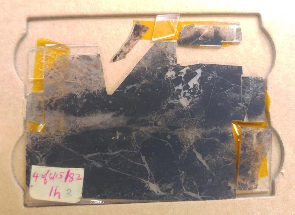 Los más antiguos fósiles encontrados confirman que ya había vida en la Tierra hace 3.500 millones de años