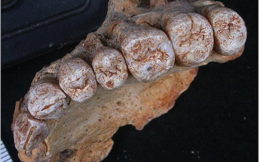 Restos del más antiguo Homo Sapiens encontrado fuera de África cambian la cronología de la evolución