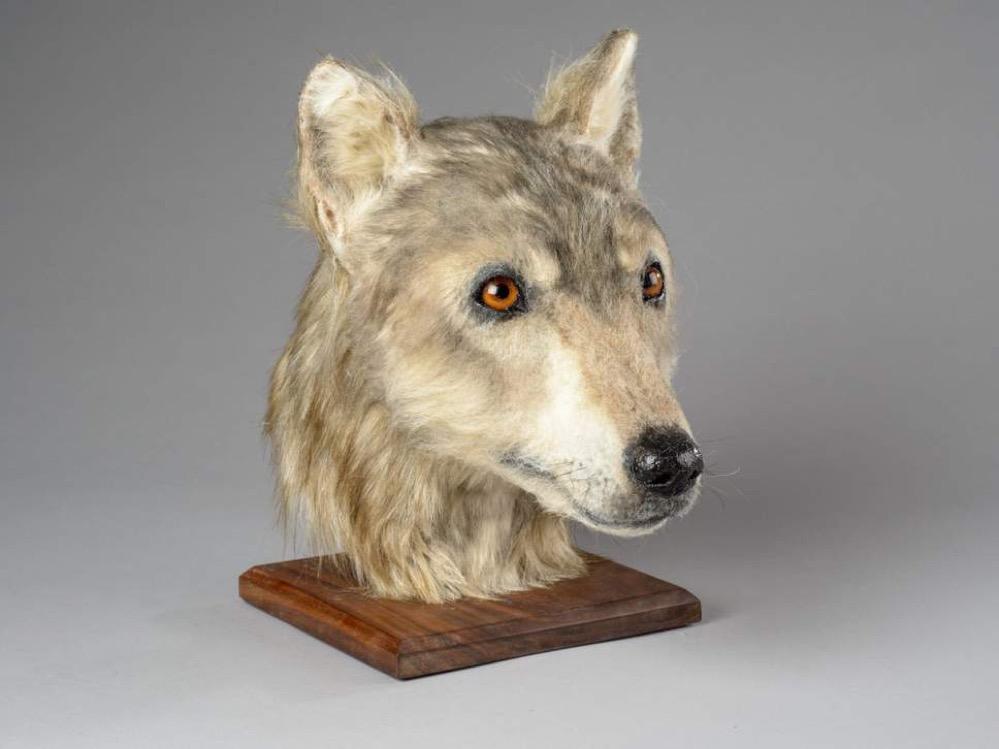 Reconstruyen el rostro de un perro de hace 4.500 años a partir de los restos encontrados en una tumba neolítica en Escocia