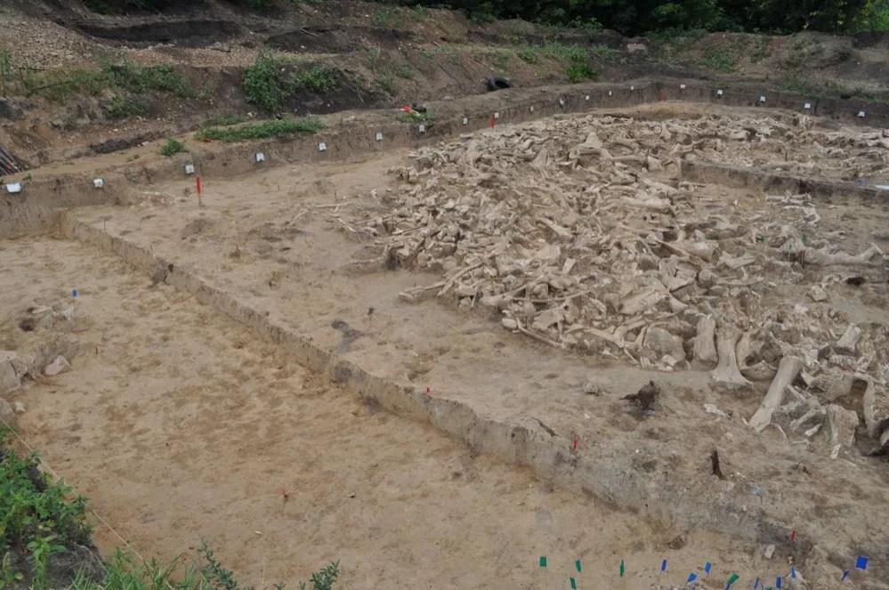 Misteriosos círculos óseos hechos con restos de mamuts revelan pistas sobre la Edad de Hielo
