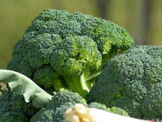 Broccoli-copertina