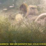 epave-marinette-plongee-lac-du-bourget-faune&flore-deep-ccr-tartiflette-team-2