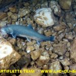 Plongée omble chevalier lac du Bourget Deep CCR Tartiflette team