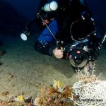 Plongee Dorsale Cavalaire Deep CCR Tartiflette Team
