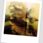 Livre photos Rémi Masson Eaux douces des Alpes