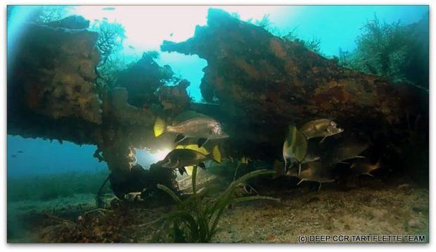 Plongee épave P47 Santa Severa Corse