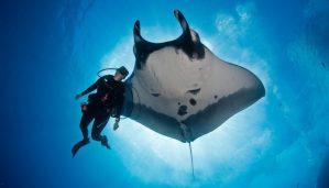 Voyage plongée - plonger avec les raies manta