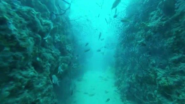 Plongée en France sur le couloir aux gorgones à Marseille
