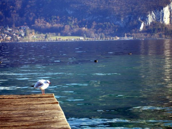 Plongée lac d'Annecy