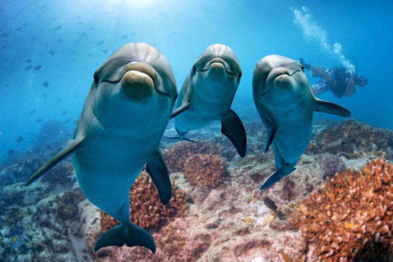 nager et plonger avec les dauphins