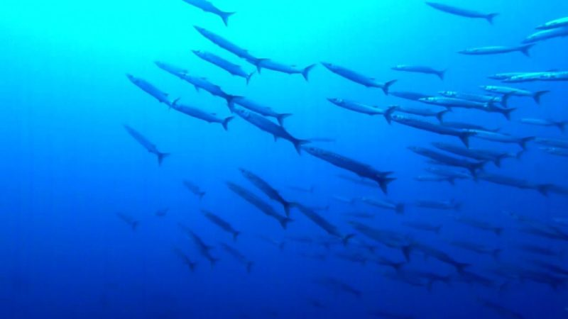 Plongée Antibes