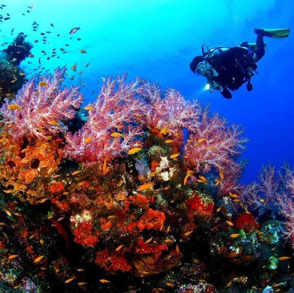 Voyage plongée Indonésie