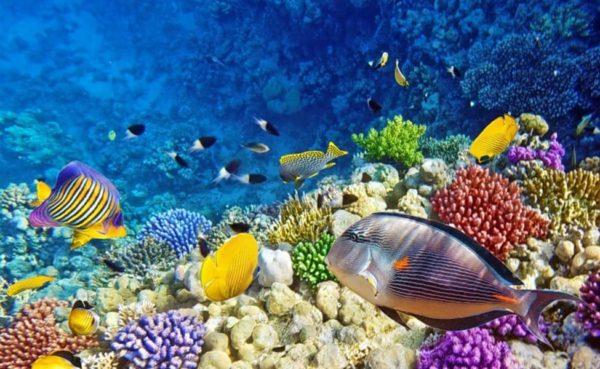 Plongée Maldives photo Thrillophilia