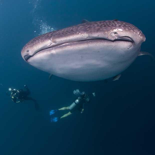 Meilleurs endroit pour la plongée avec les requins