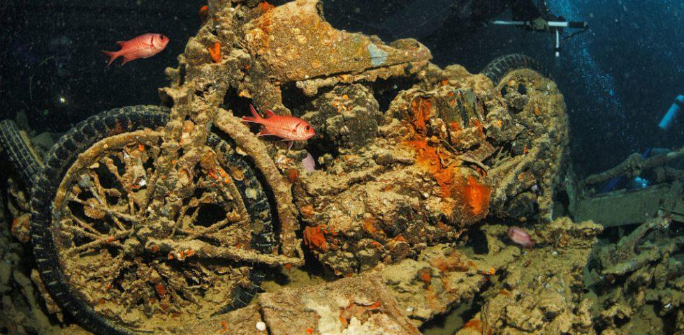 Plongée en Novembre sur les épaves de la mer Rouge