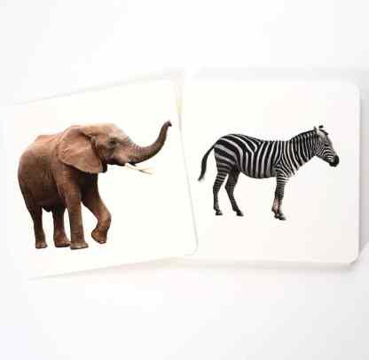 Animaux d'Afrique savane sauvages - cartes de nomenclature Montessori