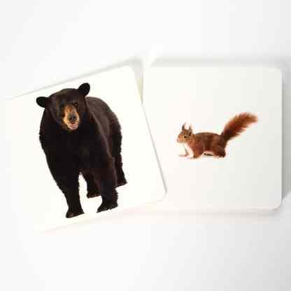 mammifères d'Europe sauvages - cartes de nomenclature Montessori