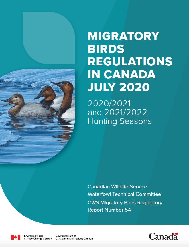 migratory birds - Canada geese