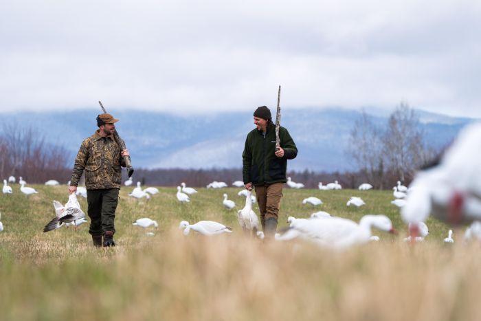 Goose hunts with Hooké