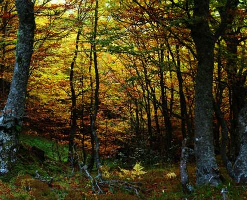 Hayedo Montegrande - casa rural La Carrozal Asturias Teverga