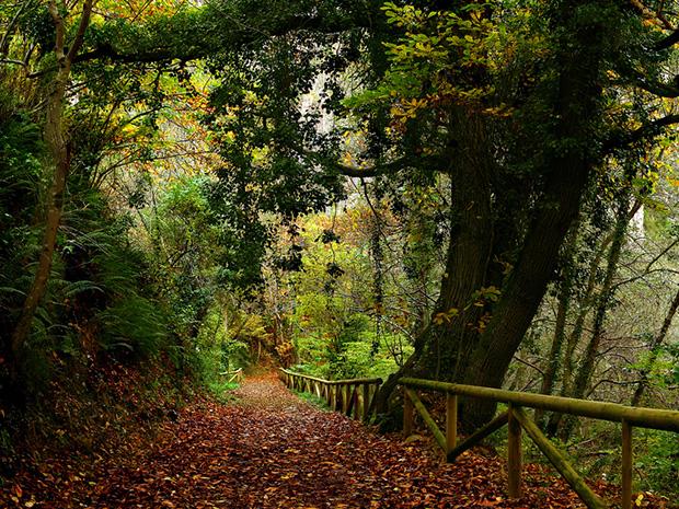 Senda del Oso cerca casa rural La Carrozal Asturias Teverga