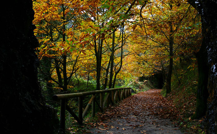 Ruta del Oso, via verde en Asturias