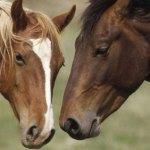 Montar a caballo en Asturias, Teverga. Rutas ecuestres