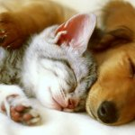 Casa Rural admite animales: perros, gatos y otras mascotas en Asturias