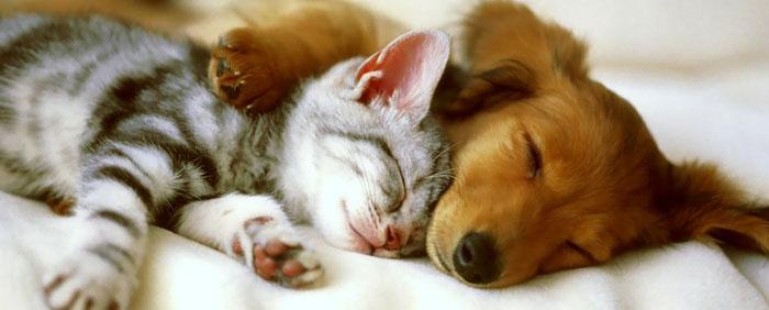 Casa rural asturias admite perros y mascotas