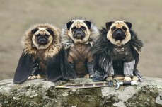 18-pets-who-are-slaying-at-cosplay5 - copia
