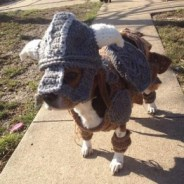 the_elder_scrolls_v_skyrim_inspired_dog_costume_1-290x290