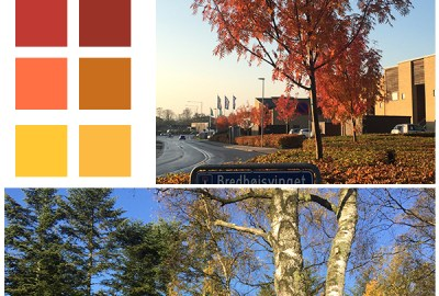 Color inspiration Autumn color palette