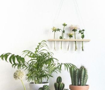 5 plants to decorate your kitchen that you should not miss 02
