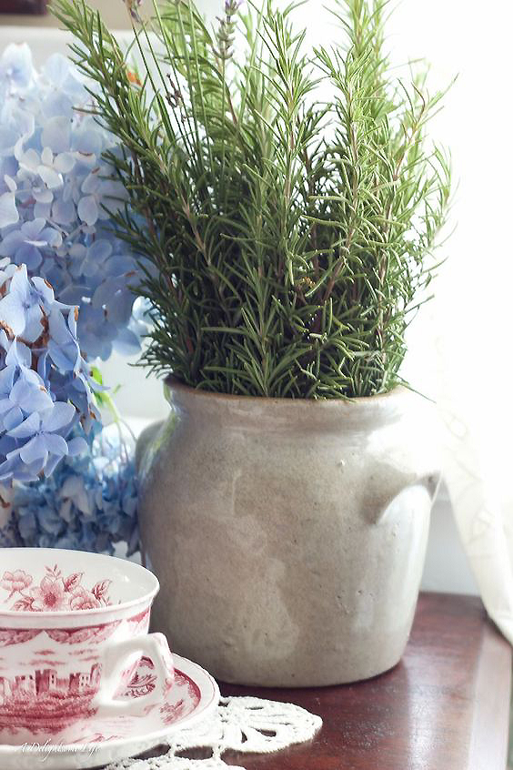 5 plants to decorate your kitchen that you should not miss 07